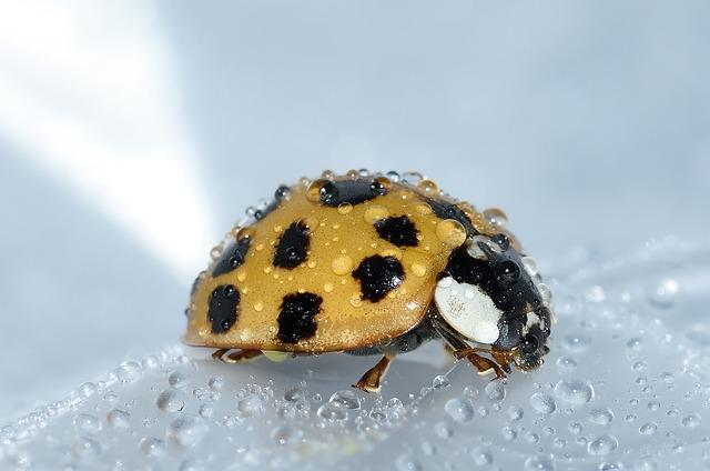 beetles-994211_640